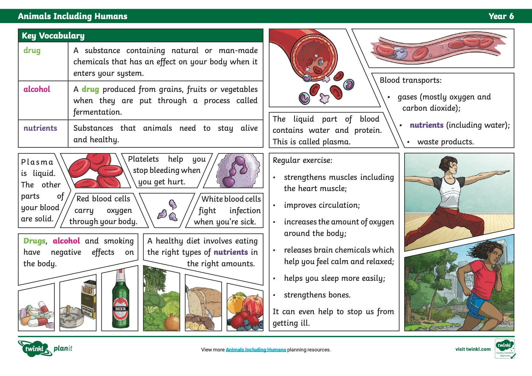 T Sc 2549643 Science Knowledge Organiser Animals Including Humans Year 6 Ver 6 2